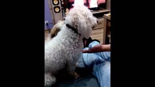 Pies się modli bo chce jeść