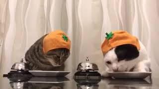 Короли коты!!!