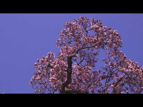 The 2018 White House Spring Garden Tours