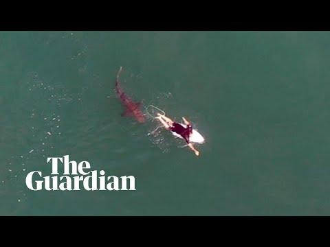 Αυστραλία: Σέρφερ και καρχαρίας κολυμπούν σε απόσταση αναπνοής