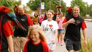 Germany - Biggest Parrot Harness Outing in Germany
