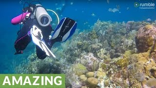 Divers Explore The Magical Underwater World Of Roatán, Honduras