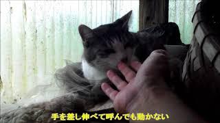 豪雨に足止めされて避難所で寝る猫
