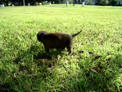 Humphrey Marches in the Lawn