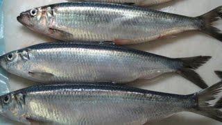 Как солить рыбу/быстро и просто/how to salt fish/