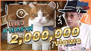 เห้ย!! แมวมายคราฟของจริง?!! : โซเชียลสนุกจังโว้ย l VRZO