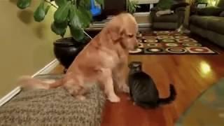 Посвящение кота в собаку (озвучка)