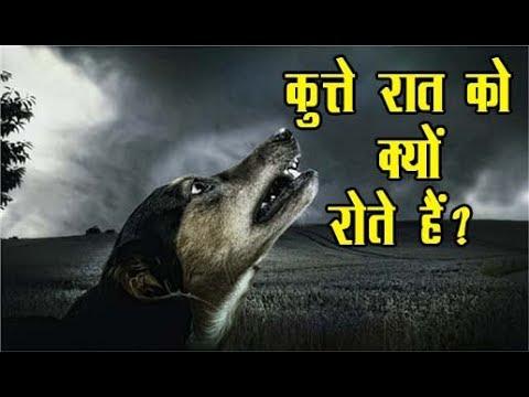 रात में घर के बाहर कुत्ते क्यों रोते रहते हैं, जानिए सच II Asal news