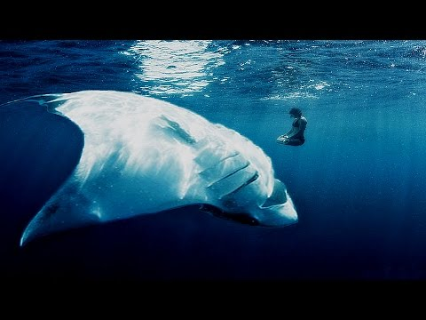 Top 5 Biggest Rays Ever Caught