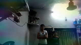 Dard Karaara [Full Song HD Kumar Sanu, Sadhana Sargam Dum Laga Ke Haisha ] BY LITTLE ACHAL & ANCHAL