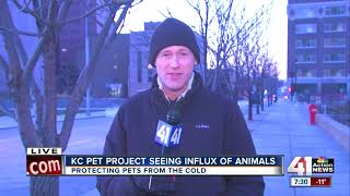 If it's too cold for humans, it's too cold for pets