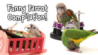 Funny Parrot Compilation - Parrot Wizard