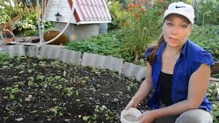 Чем подкормить пионы осенью, обрезка пионов