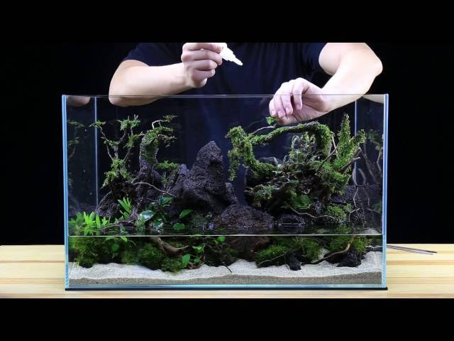 How to: Aquascape a 20G tank  - Team Buce Plant x Ultum Nature Systems - Skull Island