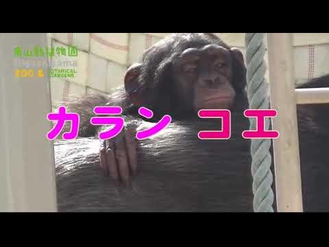 【東山動植物園公式】カランコエ2歳の誕生日