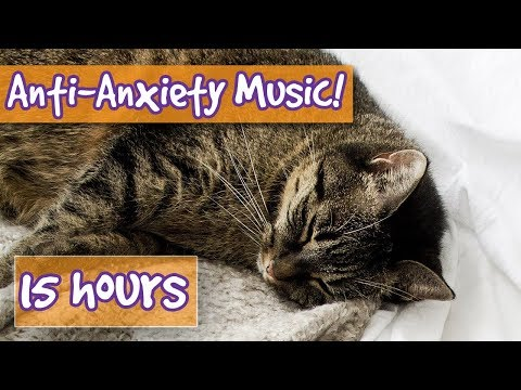Download Longest Ever Relaxing Cat Music! 15 Hours of Relaxing Music, How to Calm Cats with Anxiety!🐈 || NEW Mp4 HD Video and MP3