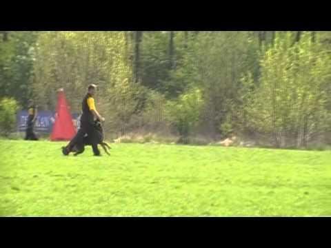 Preview video Yucci Vikar a Zbyšek Gorecki VZ MSKS Ostrava - BEST obedience