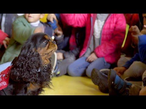 Imagen del vídeo Niños y mascotas aprendiendo juntos en la escuela
