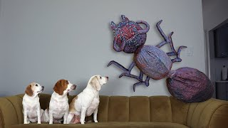 Dogs vs Giant Ant Prank: Funny Dogs Maymo, Penny & Potpie Battle Giant Insects