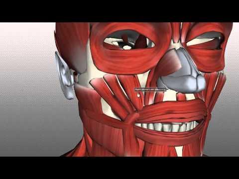 Pag-aangat facial surgery video