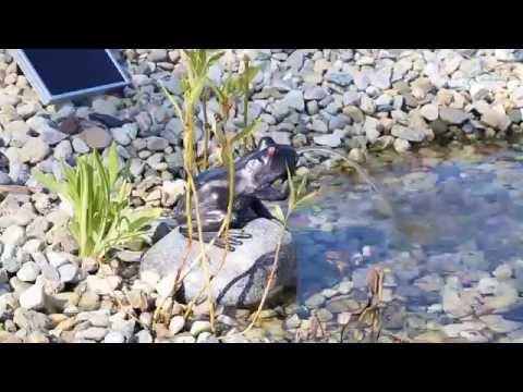 CLGarden Solar Wasserspeier NSP10 Wasserspiel Springbrunnen für Teich