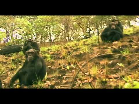 Chimp Patrol