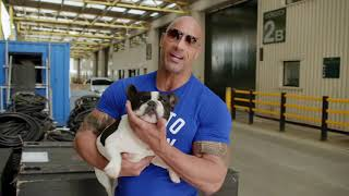Dwayne The Rock Johnson Buys Puppies From Poetic French Bulldogs