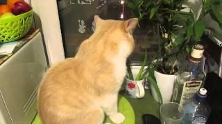 Смотреть онлайн Хозяин ругает своего говорящего кота
