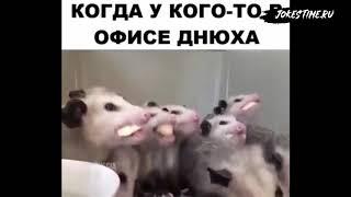 8 МИНУТ СМЕХА ДО СЛЁЗ 2019 ЛУЧШИЕ РУССКИЕ ПРИКОЛЫ ржака  #8