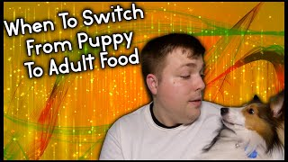 When To Switch From Puppy Food to Adult Food with tips Pupdate #31 MumblesVideos