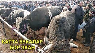 24 марта 2019 г. Махсус Мол бозор нархлари