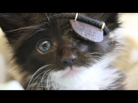 Adorable Kitten. Rocking Eye Patch. Heartwarming Story.