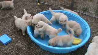 Puppies Synonymous With Cute