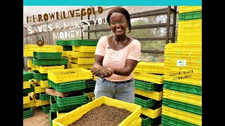 Brown live Gold - The Black Soldier Fly agripreneur