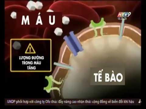 Điều trị tiểu đường type 1 bằng tế bào gốc