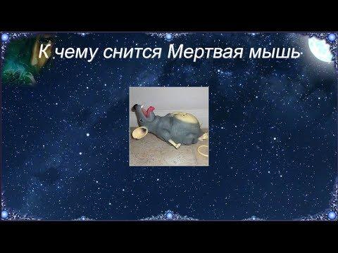 К чему снится Мертвая мышь (Сонник)