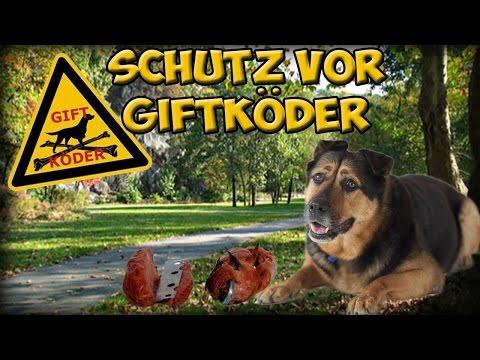 ANTI GIFTKÖDER TRAINING | Hund vor Giftköder schützen! So schützt ihr euren Hund vor Giftködern!