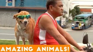 Animals are Awesome Compilation 2018