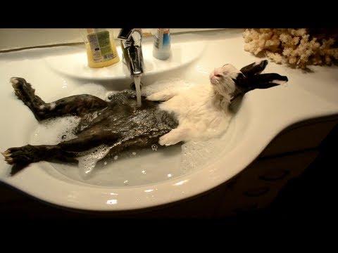 הארנב קלודי מתפנק באמבטיה