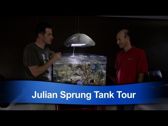 Mr. Saltwater Tank Tours Julian Sprung's Personal Reef Tank