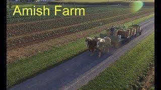 Life at a Amish Farm