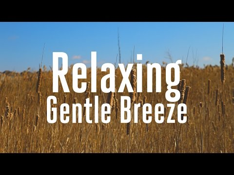 Download Wind Sound Effect 1 Gentle Breeze Video 3GP Mp4 FLV