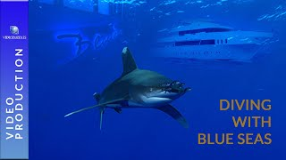 "Scuba diving in the Red Sea with Blueplanet Liveaboards ""MY Blue Seas"""
