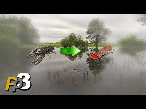 Русская Рыбалка 3.8 Ловля раков для раковой шейки
