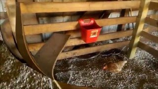 OFF GRID: DIY HORSE STALL FEEDER, RECYCLED MATERIAL