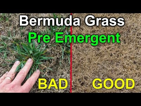 Preemergent for Bermuda Grass - Amazing results with pre emergent.