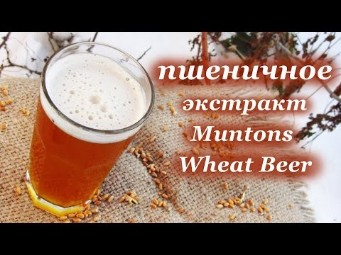 Beer Zavodik.  Muntons Wheat Beer + неохмеленка