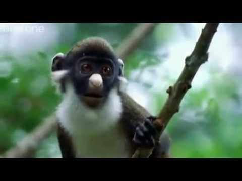 Some Very Funny People Give Voice to These Animals