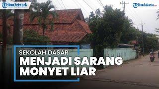 Lama Terbengkalai, Sekolah di Kabupaten Tangerang Jadi Sarang Monyet Liar