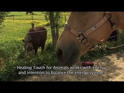 Introduction Healing Touch for Animals - English - YouTube